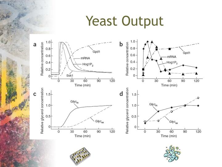 Yeast Output