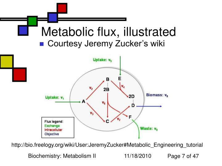 biochemistry metabolism