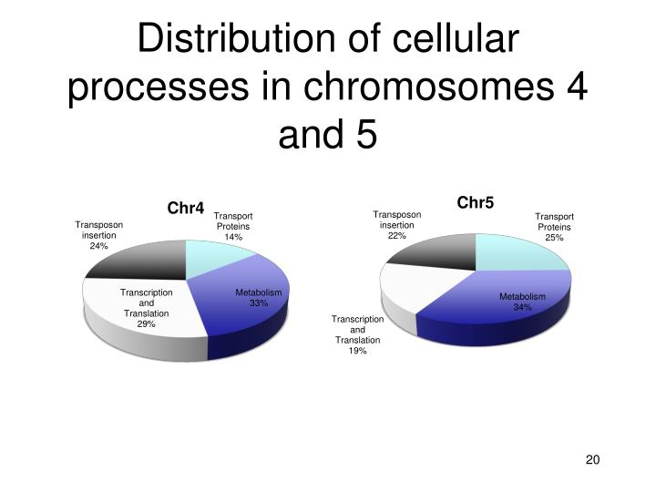 Distribution of cellular processes in chromosomes 4 and 5