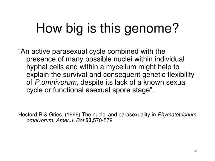 How big is this genome?