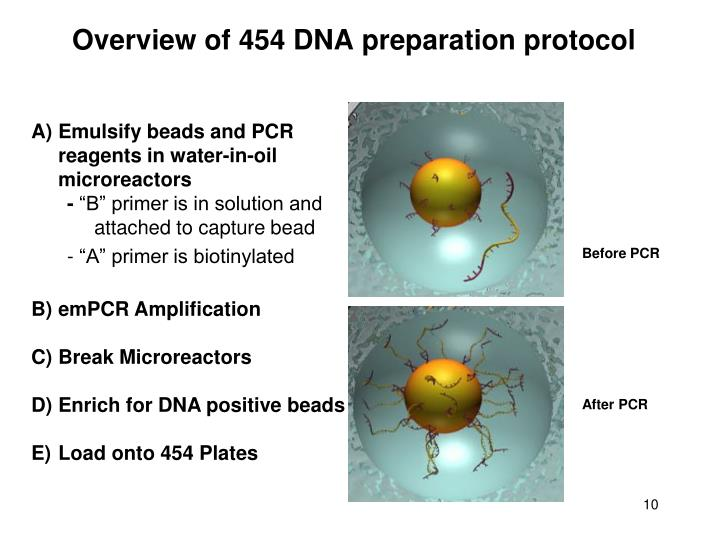 Overview of 454 DNA preparation protocol