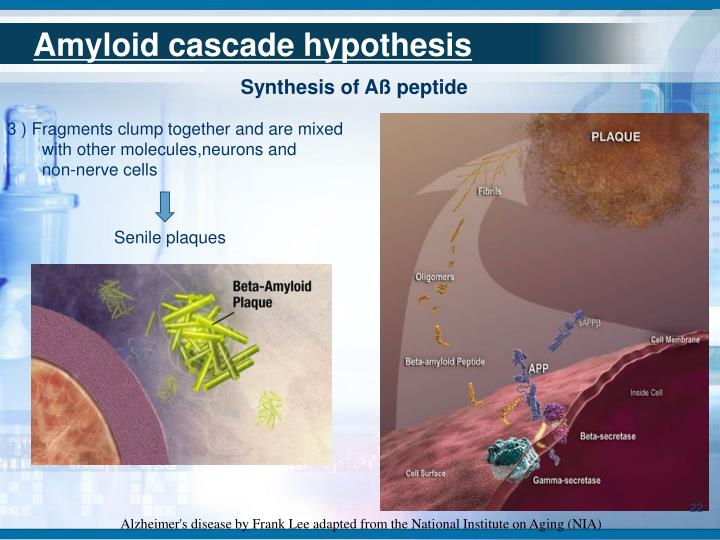 Amyloid cascade hypothesis