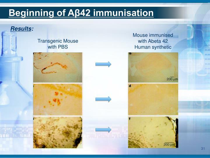 Beginning of Aβ42 immunisation
