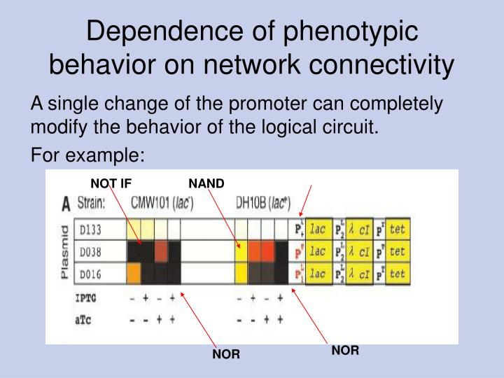 Dependence of phenotypic behavior on network connectivity