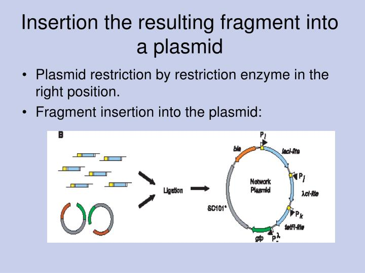 Insertion the resulting fragment into a plasmid