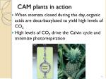cam plants in action