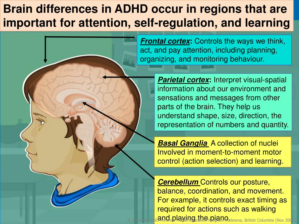 Brain Differences In Adhd >> Ppt Class 3 Neurobiology Of Adhd Powerpoint Presentation Id