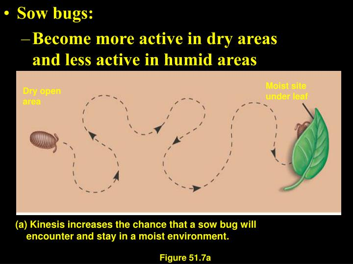 Sow bugs:
