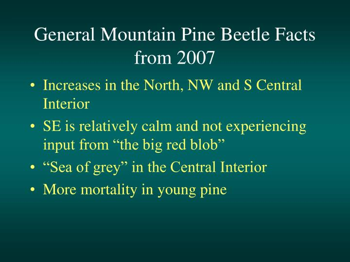 General Mountain Pine Beetle Facts from 2007