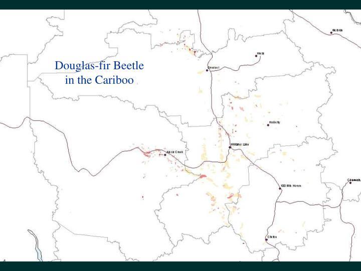 Douglas-fir Beetle in the Cariboo