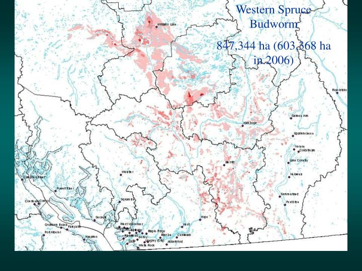 Western Spruce Budworm