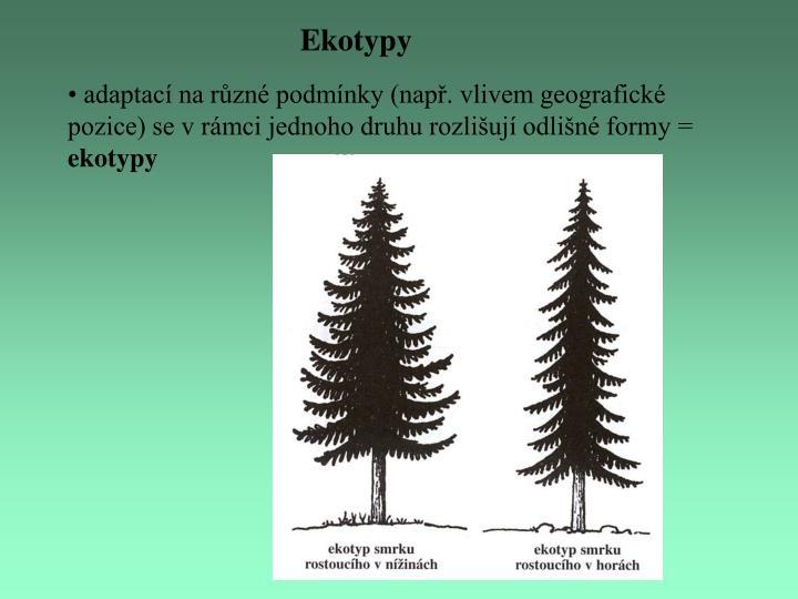 Ekotypy