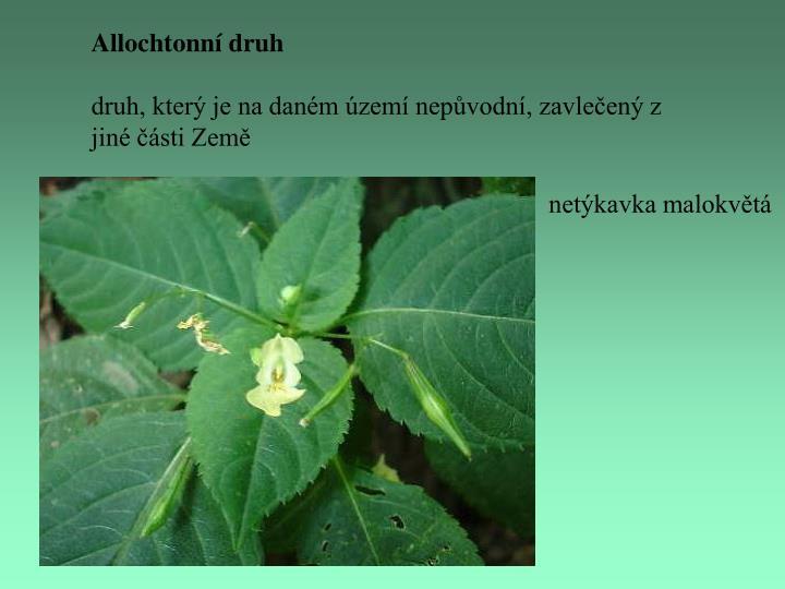 Allochtonní druh