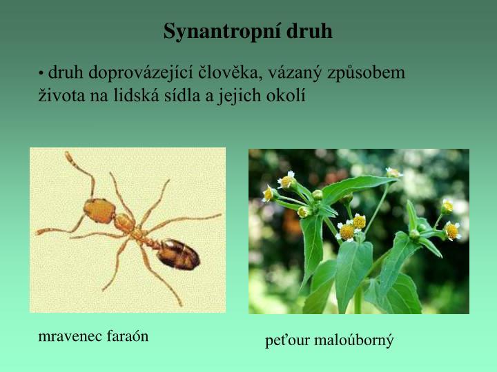 Synantropní druh
