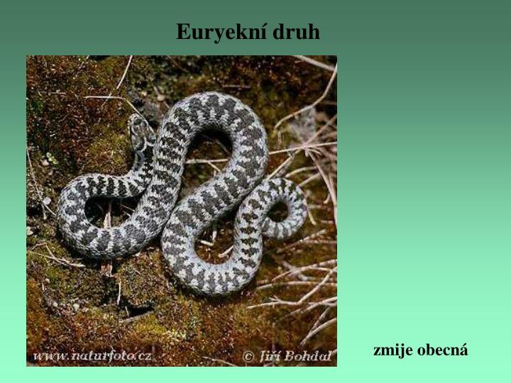 Euryekní druh