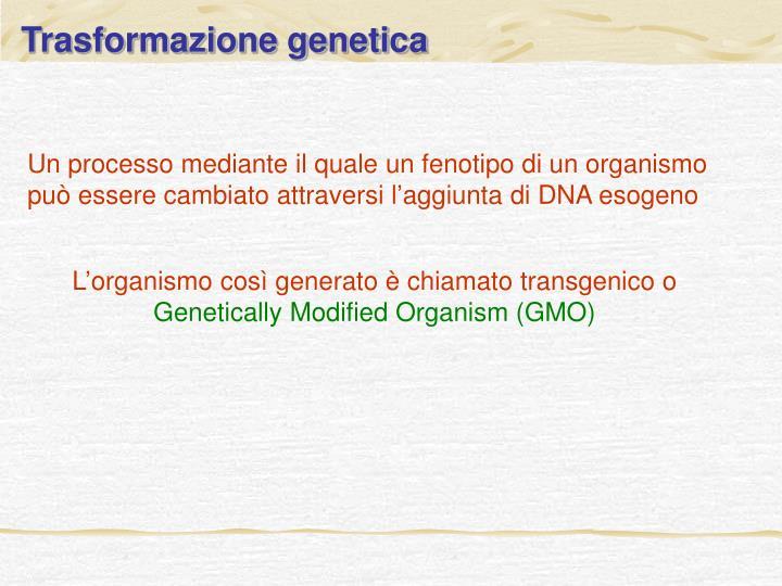 Trasformazione genetica