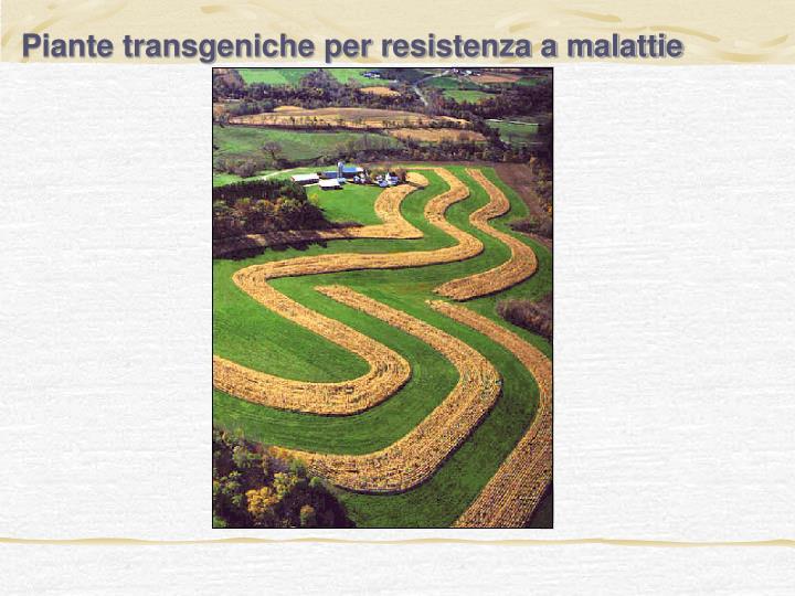 Piante transgeniche per resistenza a malattie