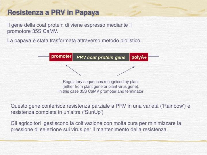 Resistenza a PRV in Papaya
