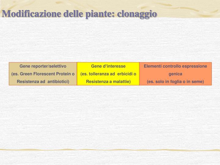 Modificazione delle piante: clonaggio