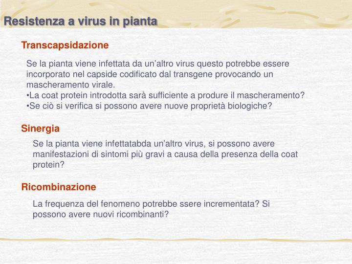 Resistenza a virus in pianta
