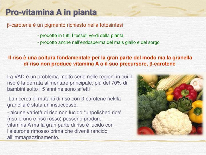 Pro-vitamina A in pianta