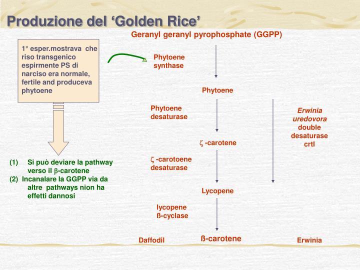 Produzione del 'Golden Rice'