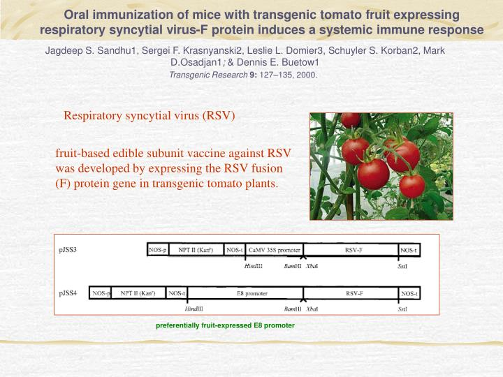 Oral immunization of mice with transgenic tomato fruit expressing respiratory syncytial virus-F protein induces a systemic immune response