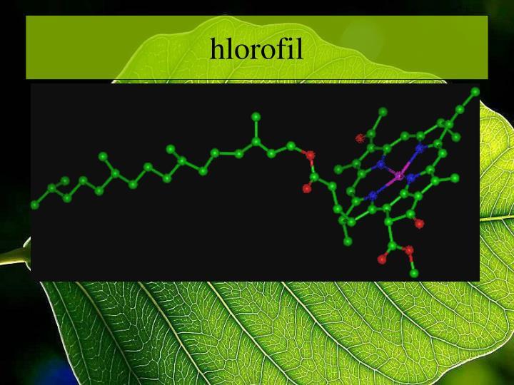 hlorofil