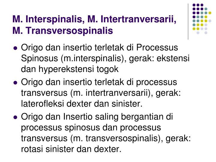 M. Interspinalis, M. Intertranversarii,