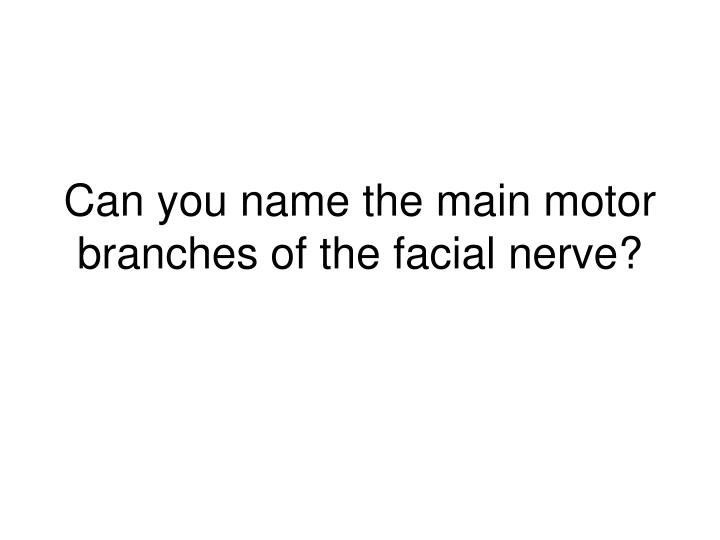 Can you name the main motor branches of the facial nerve?