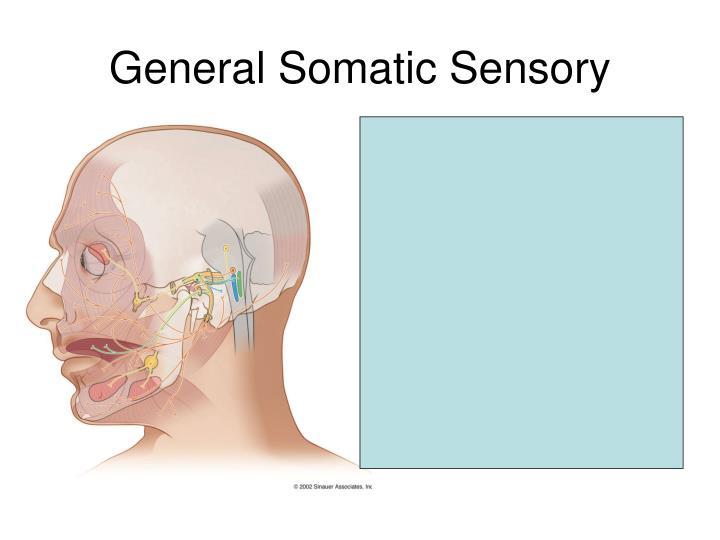 Region near external auditory meatus