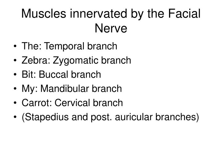 Muscles innervated by the Facial Nerve