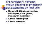 tre h ndelser i nefronet mellan bildning av prim rurin och uts ndring av final urin
