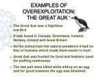 examples of overexploitation the great auk 4
