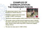 examples of overexploitation the passenger pigeon 5