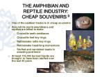 the amphibian and reptile industry cheap souvenirs 9