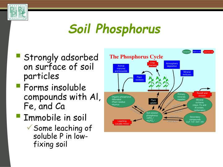 Ppt terry l roberts potash phosphate institute potash for What substances are in soil