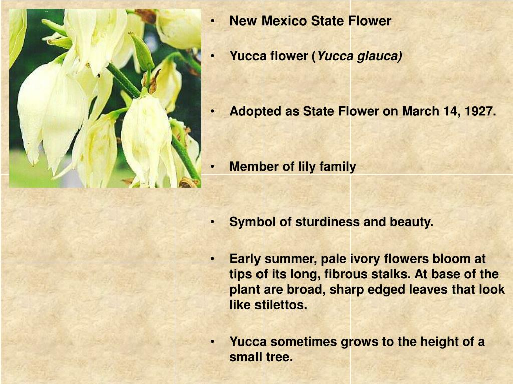 Ppt The State Of New Mexico Powerpoint Presentation Free Download Id 4447493