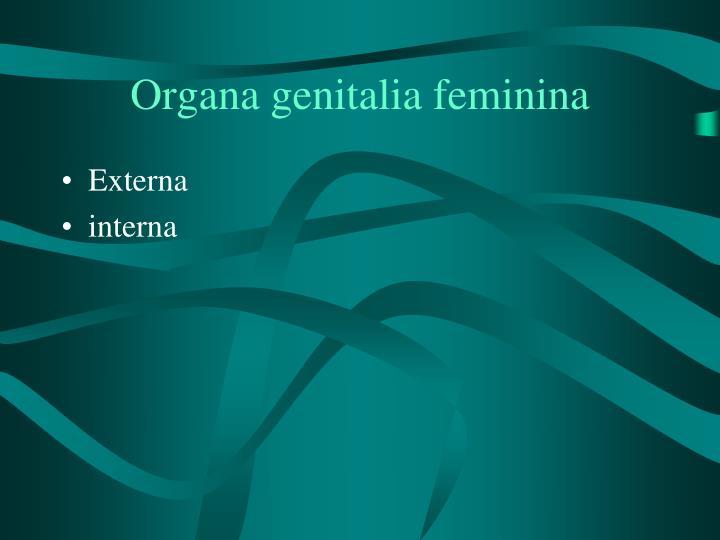 Organa genitalia feminina