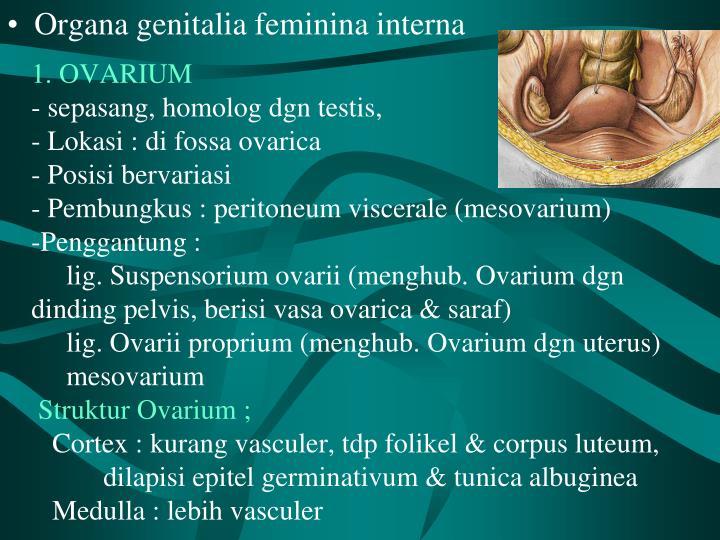 1. OVARIUM
