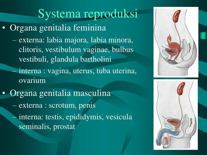 Systema reproduksi1