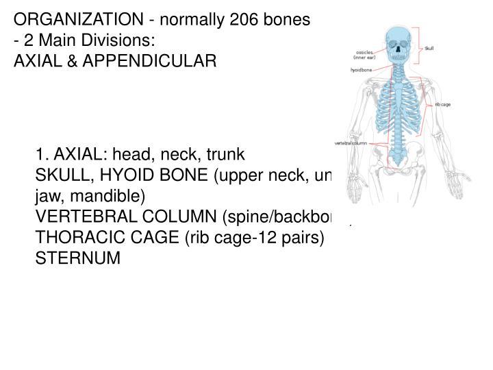 Ppt Skeletal System Powerpoint Presentation Id4453883