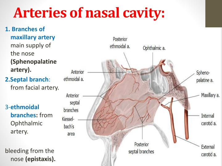 my nasal cavity burns - 720×540