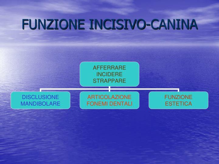 FUNZIONE INCISIVO-CANINA