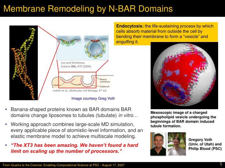 Membrane Remodeling by N-BAR Domains