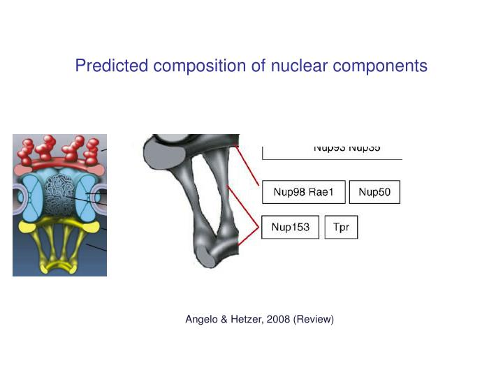 Predicted composition of nuclear components