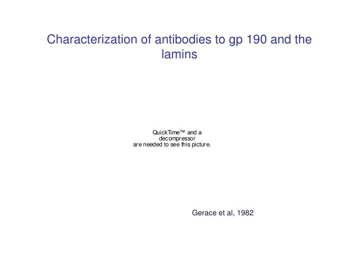 Characterization of antibodies to gp 190 and the lamins