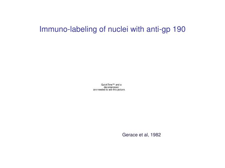 Immuno-labeling of nuclei with anti-gp 190