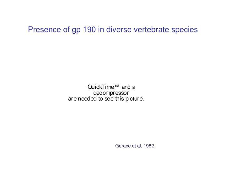 Presence of gp 190 in diverse vertebrate species