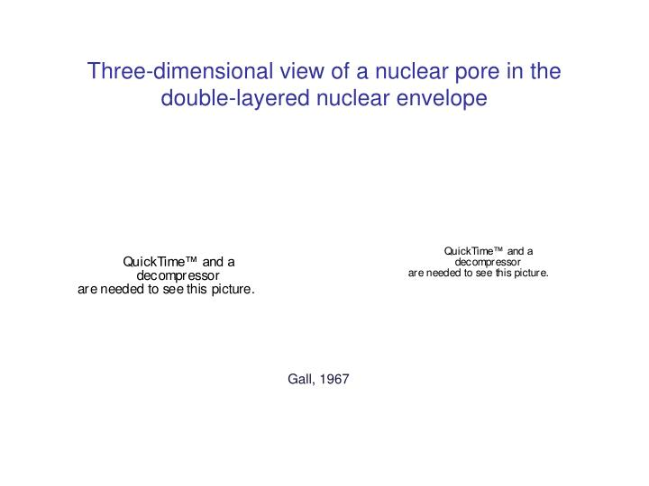 Three-dimensional view of a nuclear pore in the double-layered nuclear envelope